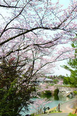 みろく公園 桜.jpg