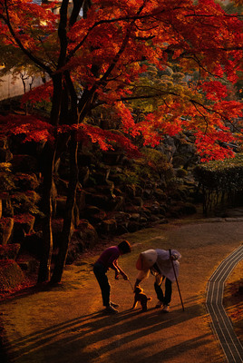6心あたたまる一枚「秋光の出会い」長谷 由美.jpg