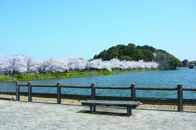 亀鶴公園 桜並木2.jpg