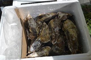 殻付き牡蠣.jpg
