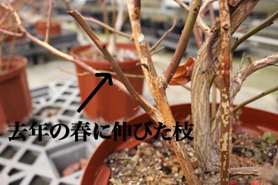 IMG_4640 のコピー.jpg